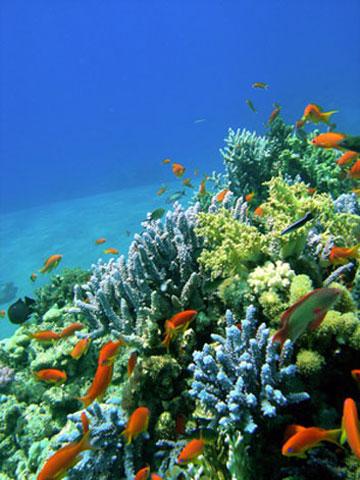 Tauchen bei Sharm El-Sheikh und Hurghada
