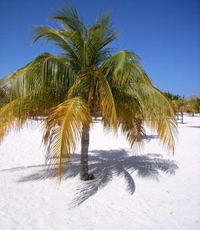 Strand in Tobago