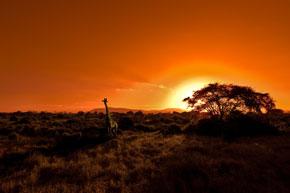 Nationalpark in Afrika