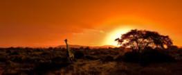 Der Krüger Nationalpark