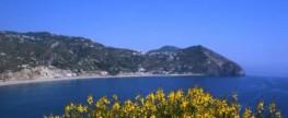 Die Insel Ischia im Frühling