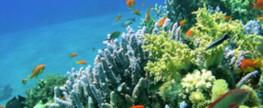 Tauchen in Hurghada und Sharm El-Sheikh